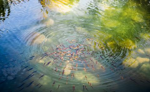 Clear pool of water with fish swimming near the surface