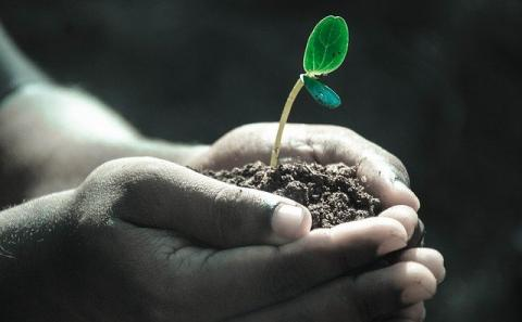 A pair of hands holding soil with a plant starting to grow with two leaves