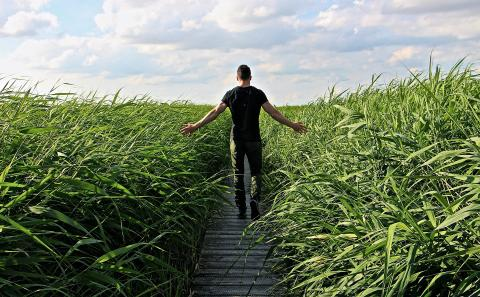 A man walking away on a narrow boardwalk with tall sea grass on either side.