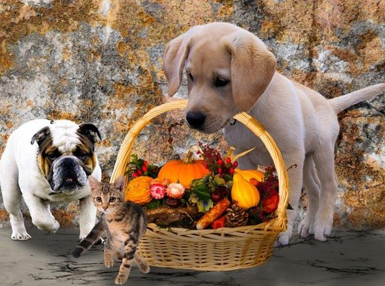 two puppies. One with a small basket handle in his mouth. In the basket are various Thanksgiving goodies and kitten just in front of the basket