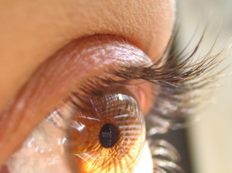 An Eye Towards the Future